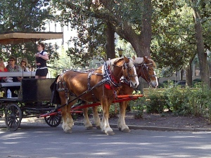 Downtown Savannah horse carriage | Photo (c) Sandy Traub